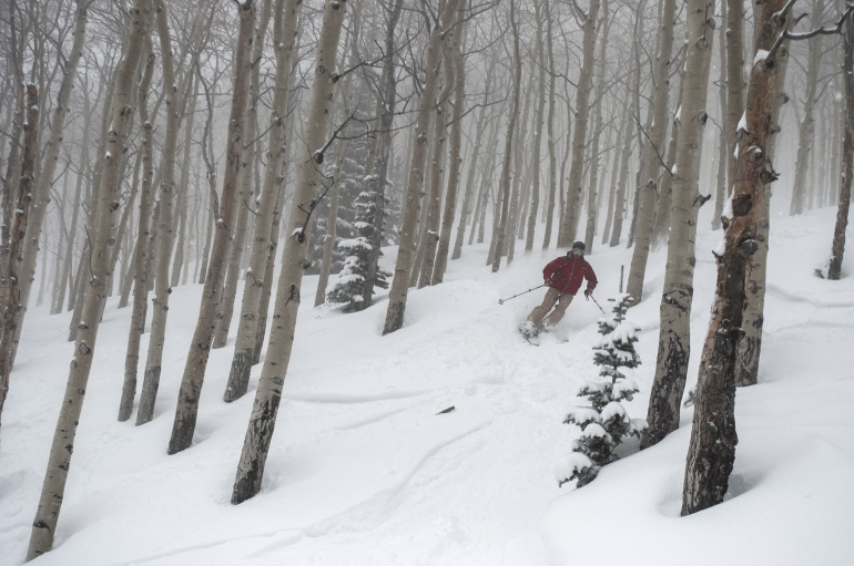 Three Keys to Tree Skiing
