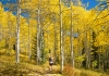 Flash of Gold in Steamboat