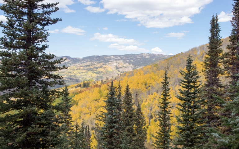 Steamboat, Steamboat Springs, Colorado, Hiking, Hike, Mountain, Rocky Mountains, Trails, Fall, Autumn, Foliage, Biking, Mountain Bike, Flash of Gold, Buffalo Pass, Activities, Ski Town, Views, Photography, Adventure, Family